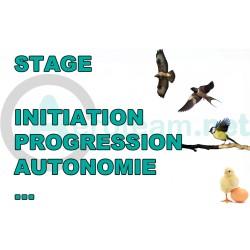 Stage - Ete